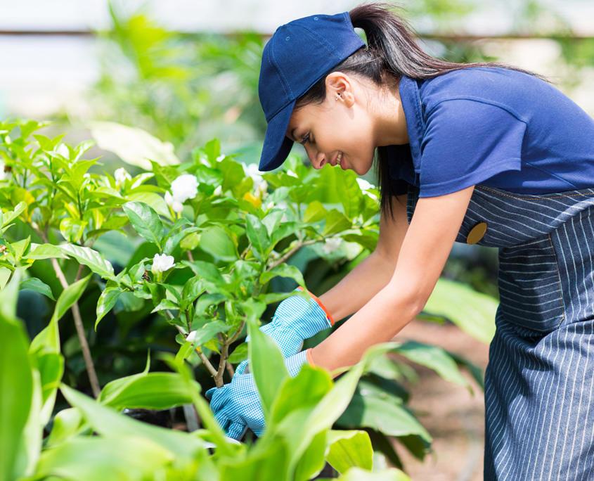 Junge Gärtnerin schneidet Pflanzen zu.